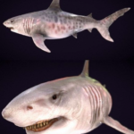 Megalodon 3D Model Free Download