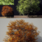 A Tree In Green And Autumn Colours 3D Model
