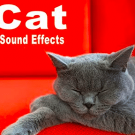 The Hollywood Edge Sound Effects Library Cat Sound Effects FLAC
